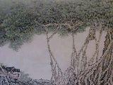 古榕树下(220X85)